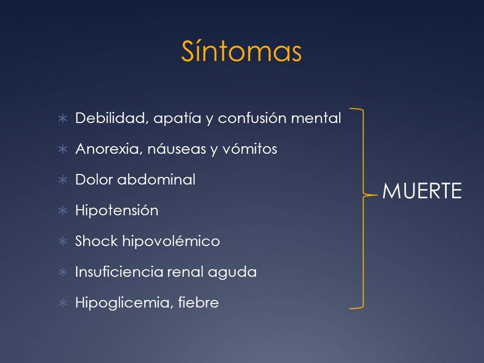 Síntomas Debilidad, apatía y confusión mental Anorexia, náuseas y vómitos Dolor abdominal Hipotensión Shock hipovolémico Insuficiencia renal aguda Hip