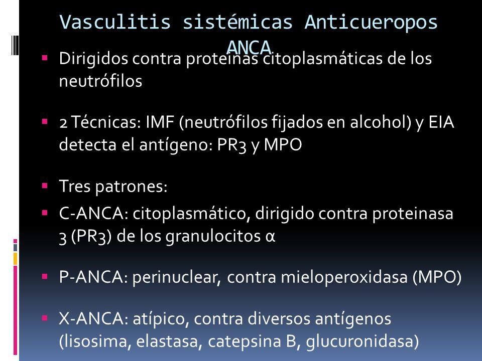 Vasculitis sistémicas Anticueropos ANCA Dirigidos contra proteinas citoplasmáticas de los neutrófilos 2 Técnicas: IMF (neutrófilos fijados en alcohol)
