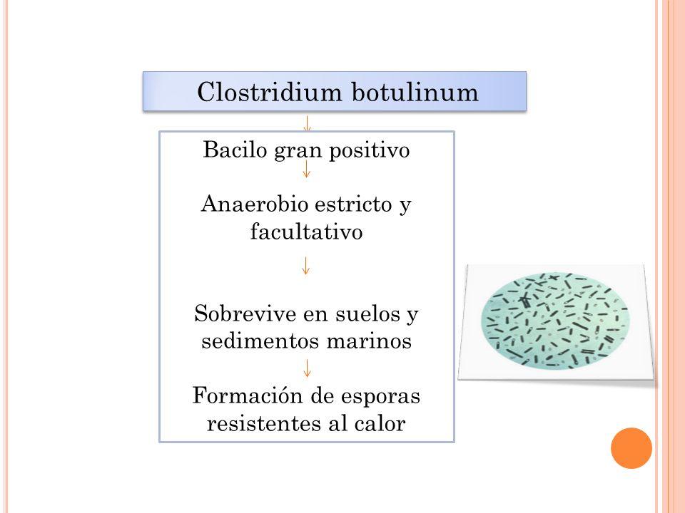 Clostridium botulinum Bacilo gran positivo Anaerobio estricto y facultativo Sobrevive en suelos y sedimentos marinos Formación de esporas resistentes