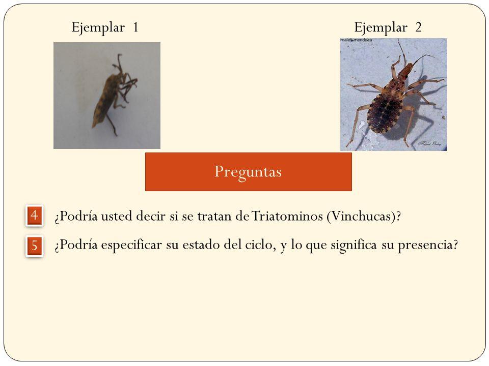 Ejemplar 1 Ejemplar 2 Pregunta ¿Podría asegurar ahora qué clase de insectos son, especifíquelo.