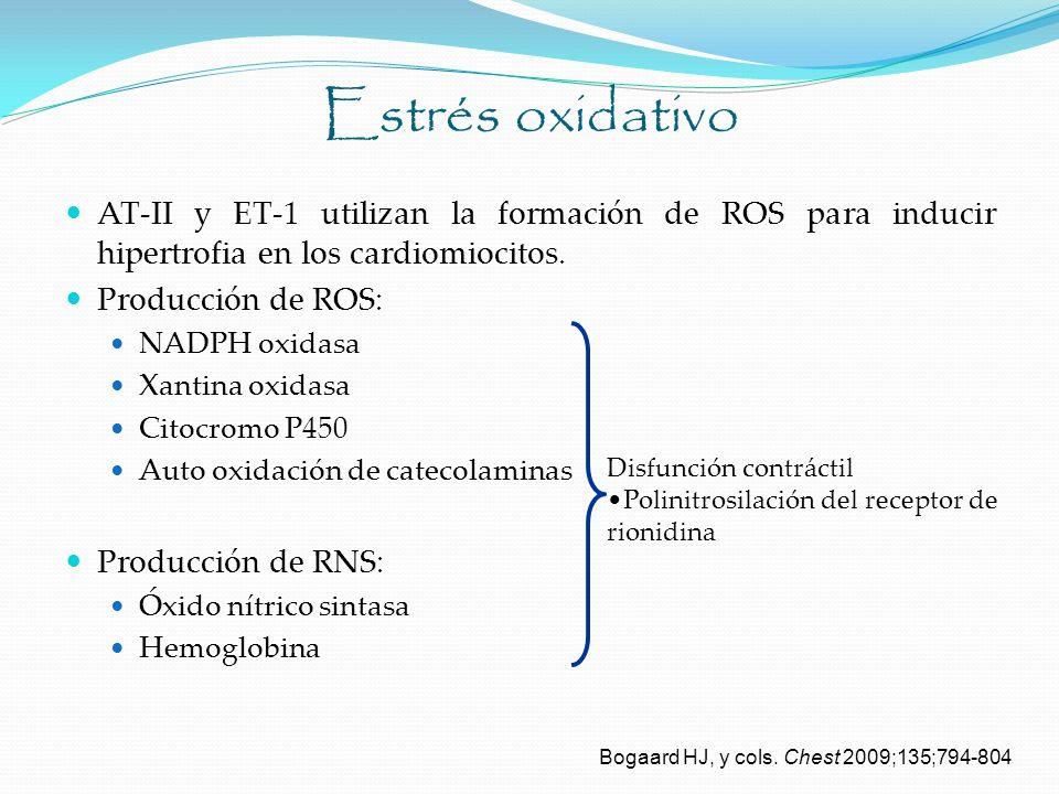 Estrés oxidativo AT-II y ET-1 utilizan la formación de ROS para inducir hipertrofia en los cardiomiocitos. Producción de ROS: NADPH oxidasa Xantina ox