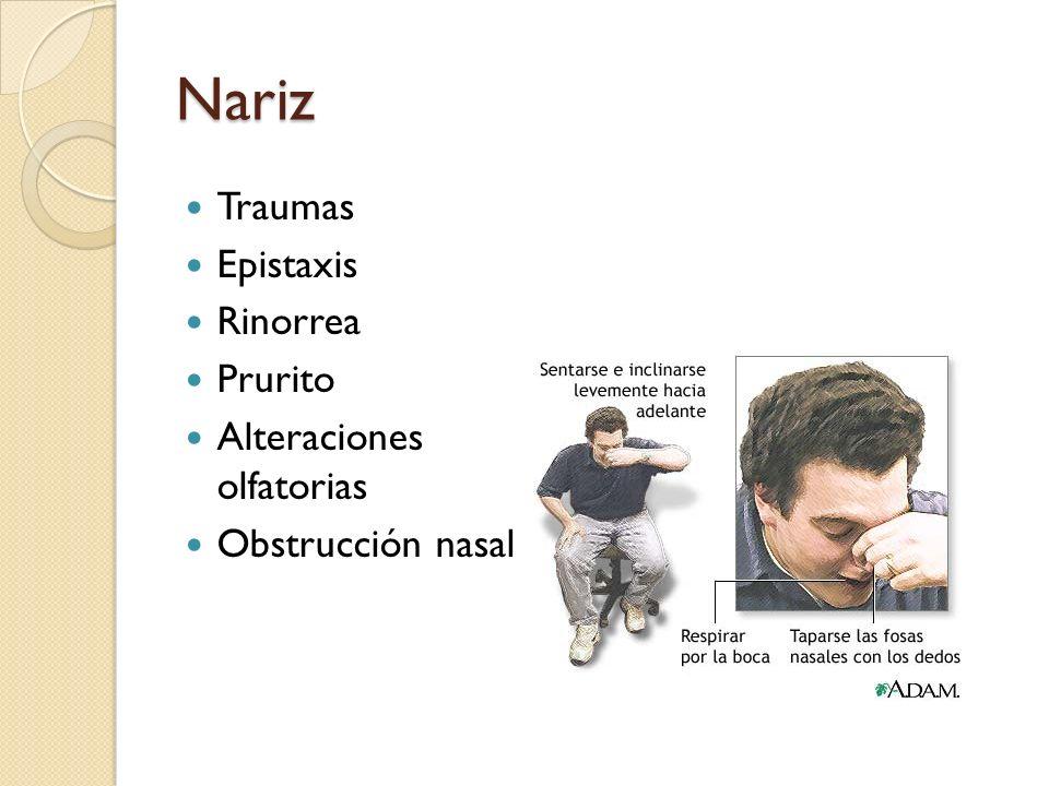 Nariz Traumas Epistaxis Rinorrea Prurito Alteraciones olfatorias Obstrucción nasal