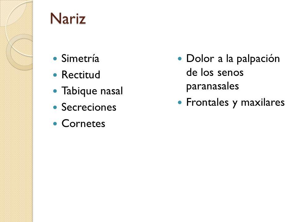 Nariz Simetría Rectitud Tabique nasal Secreciones Cornetes Dolor a la palpación de los senos paranasales Frontales y maxilares