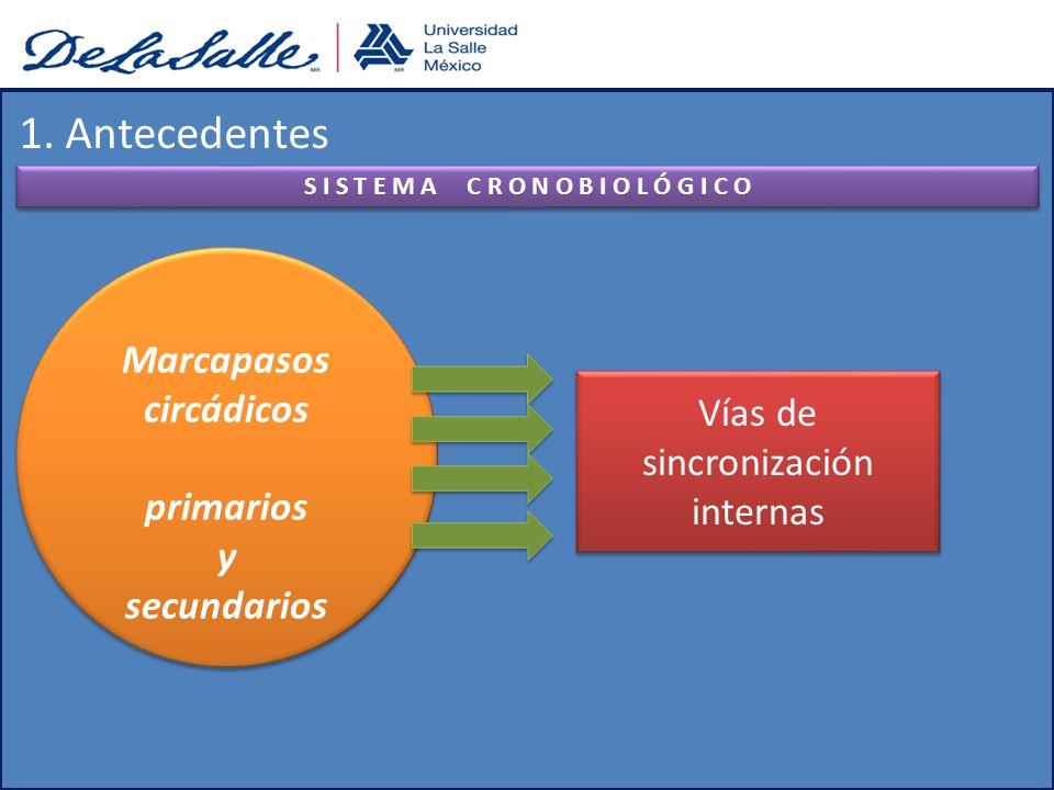 1. Antecedentes S I S T E M A C R O N O B I O L Ó G I C O Vías de sincronización internas Marcapasos circádicos primarios y secundarios Marcapasos cir