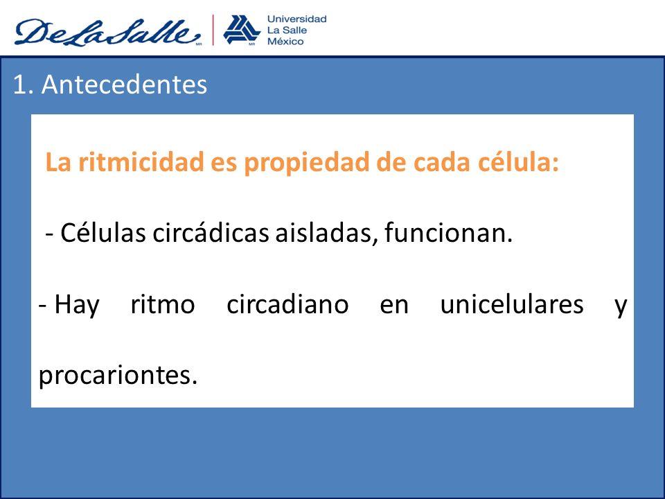 1. Antecedentes La ritmicidad es propiedad de cada célula: - Células circádicas aisladas, funcionan. - Hay ritmo circadiano en unicelulares y procario