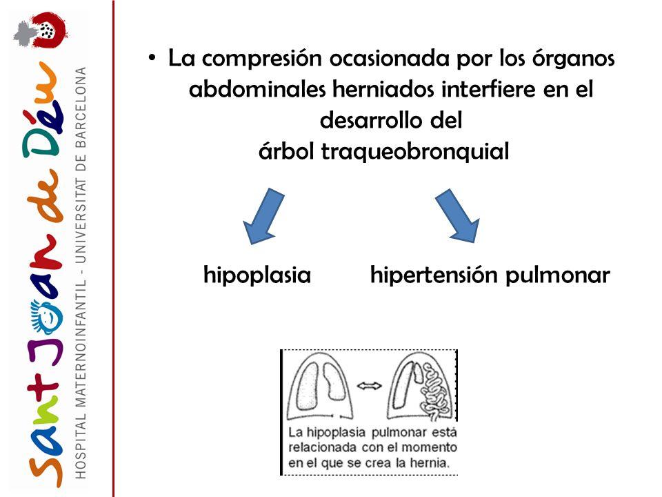 La compresión ocasionada por los órganos abdominales herniados interfiere en el desarrollo del árbol traqueobronquial hipoplasia hipertensión pulmonar