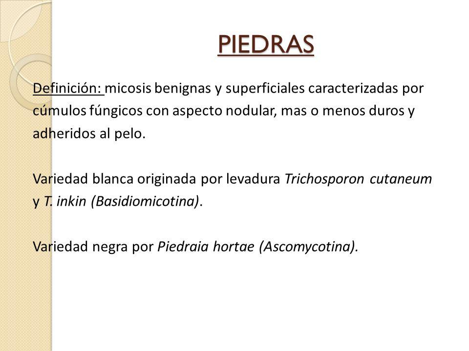 PIEDRAS Definición: micosis benignas y superficiales caracterizadas por cúmulos fúngicos con aspecto nodular, mas o menos duros y adheridos al pelo. V