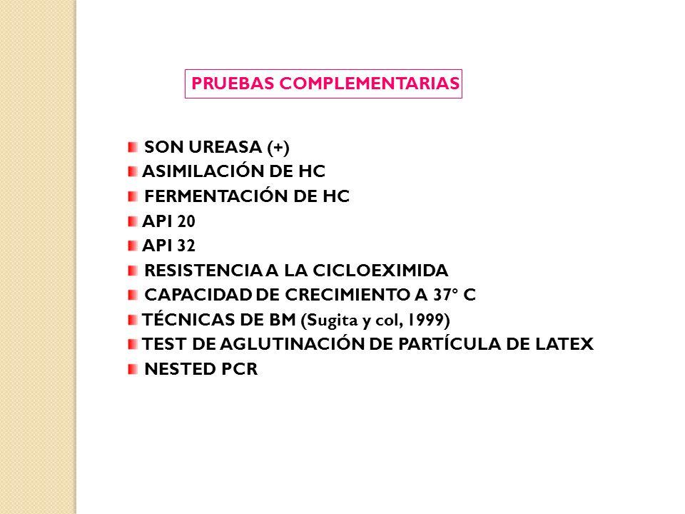 PRUEBAS COMPLEMENTARIAS SON UREASA (+) ASIMILACIÓN DE HC FERMENTACIÓN DE HC API 20 API 32 RESISTENCIA A LA CICLOEXIMIDA CAPACIDAD DE CRECIMIENTO A 37° C TÉCNICAS DE BM (Sugita y col, 1999) TEST DE AGLUTINACIÓN DE PARTÍCULA DE LATEX NESTED PCR