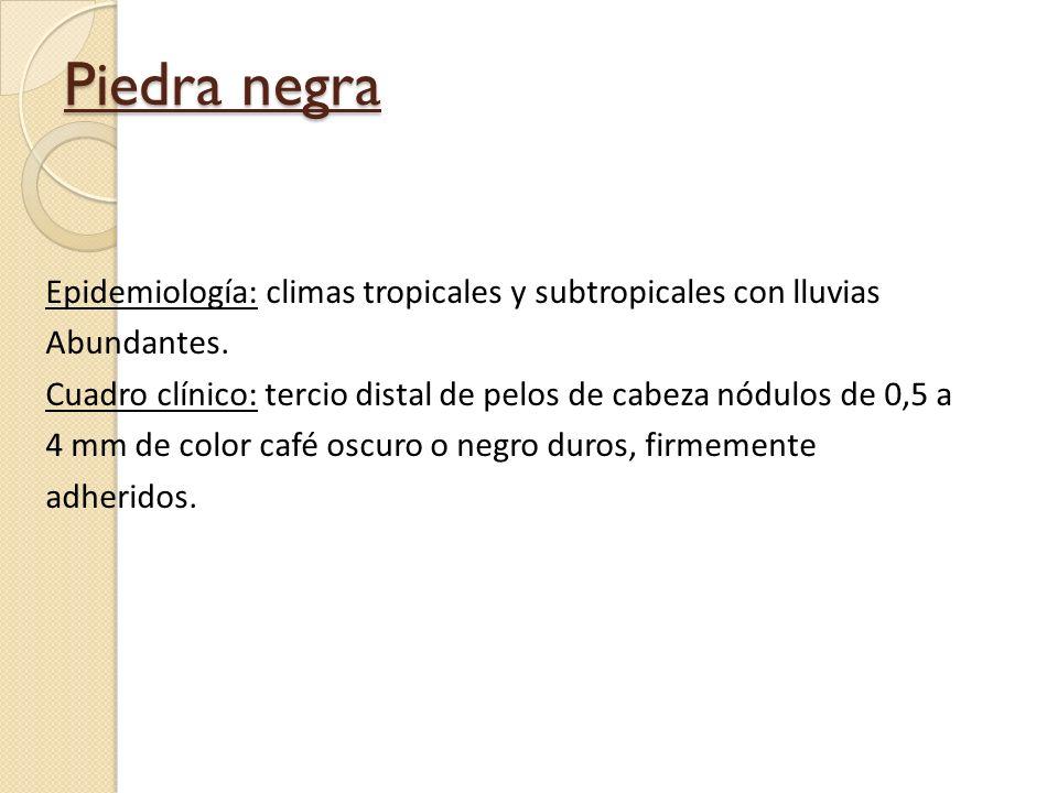Piedra negra Epidemiología: climas tropicales y subtropicales con lluvias Abundantes. Cuadro clínico: tercio distal de pelos de cabeza nódulos de 0,5