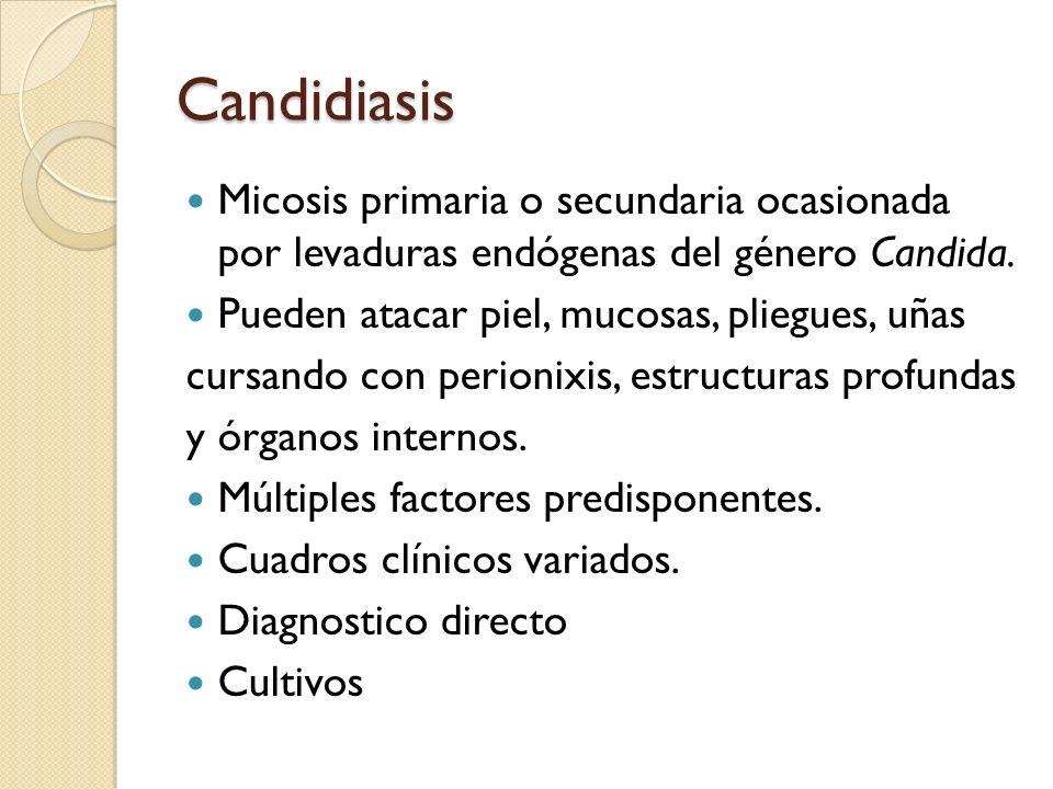 Candidiasis Micosis primaria o secundaria ocasionada por levaduras endógenas del género Candida. Pueden atacar piel, mucosas, pliegues, uñas cursando