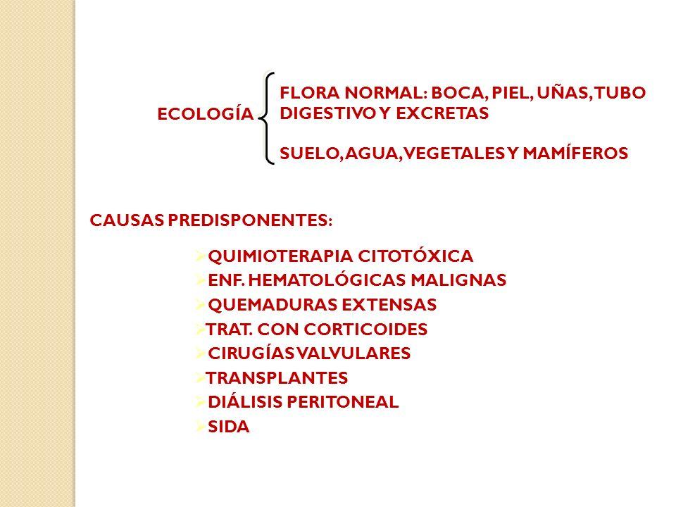 ECOLOGÍA FLORA NORMAL: BOCA, PIEL, UÑAS, TUBO DIGESTIVO Y EXCRETAS SUELO, AGUA, VEGETALES Y MAMÍFEROS CAUSAS PREDISPONENTES: QUIMIOTERAPIA CITOTÓXICA ENF.