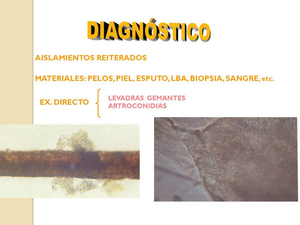 AISLAMIENTOS REITERADOS MATERIALES: PELOS, PIEL, ESPUTO, LBA, BIOPSIA, SANGRE, etc. EX. DIRECTO LEVADRAS GEMANTES ARTROCONIDIAS