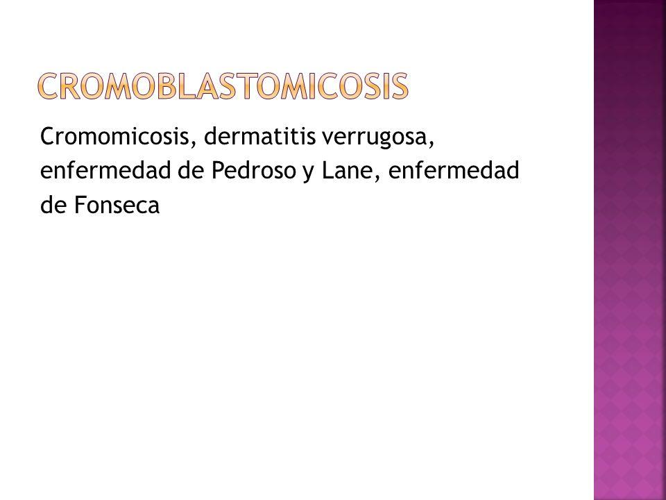 Cromomicosis, dermatitis verrugosa, enfermedad de Pedroso y Lane, enfermedad de Fonseca