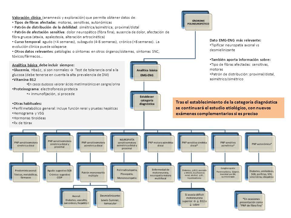 Valoración clínica (anamnesis y exploración) que permita obtener datos de: Tipos de fibras afectadas: motoras, sensitivas, autonómicas Patrón de distr