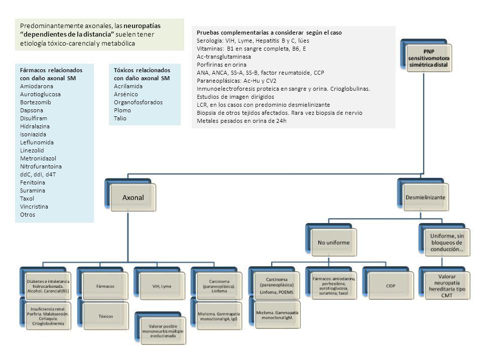 Pruebas complementarias a considerar según el caso: LCR, en los casos de presentación aguda y en crónicos de predominio desmielinizante Serología: VIH, Lyme, CMV, EBV, Hepatitis B y C, RPR, Campylobacter jejuni, Mycoplasma pneumoniae Ac-antigangliósidos Porfirinas en orina ANA, ANCA, SS-A, SS-B, factor reumatoide, CCP, ECA en suero Paraneoplásicas: Ac-Hu y CV2 Inmunoelectroforesis proteica en sangre y orina.