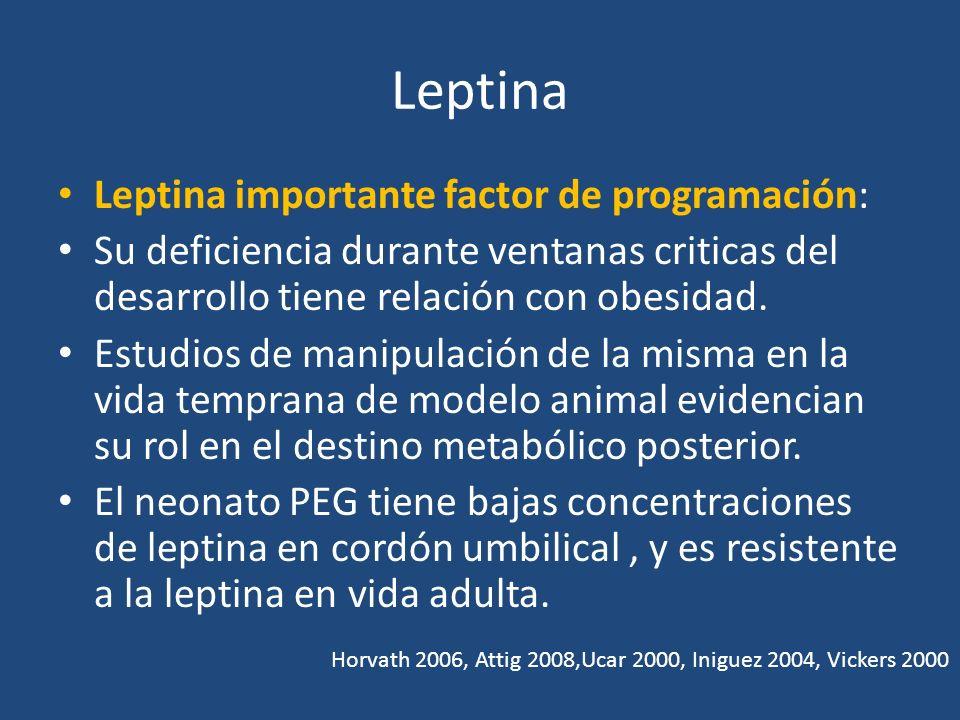 Leptina Leptina importante factor de programación: Su deficiencia durante ventanas criticas del desarrollo tiene relación con obesidad. Estudios de ma