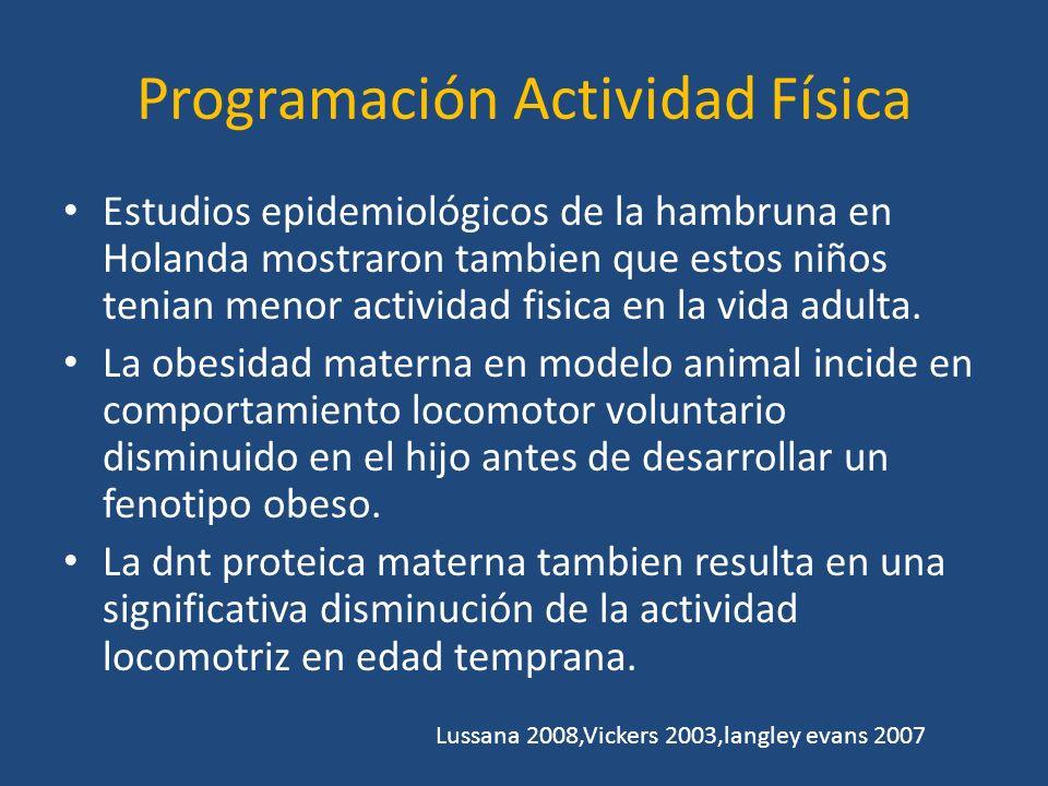 Programación Actividad fisica Estudios de Nassis en 2005 Compromiso del control del metabolismo en reposo, secundario a: déficits en el numero de fibras musculares oxidativas.