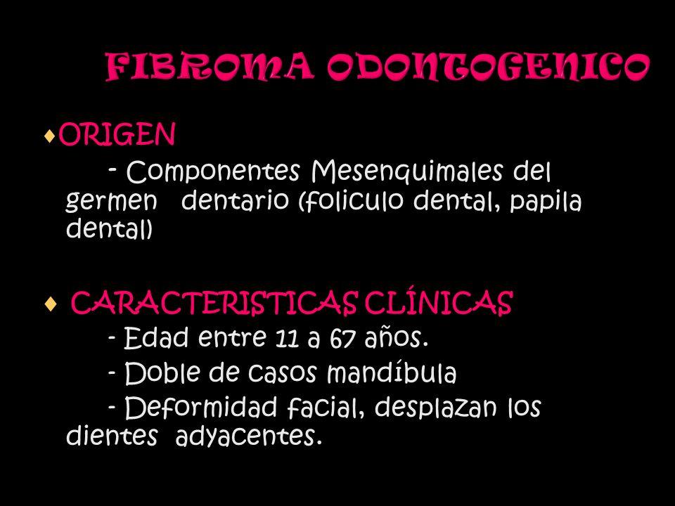 FIBROMA ODONTOGENICO ORIGEN - Componentes Mesenquimales del germen dentario (foliculo dental, papila dental) CARACTERISTICAS CLÍNICAS - Edad entre 11 a 67 años.