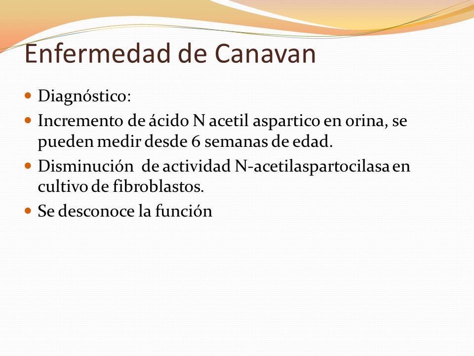 Enfermedad de Canavan Diagnóstico: Incremento de ácido N acetil aspartico en orina, se pueden medir desde 6 semanas de edad. Disminución de actividad