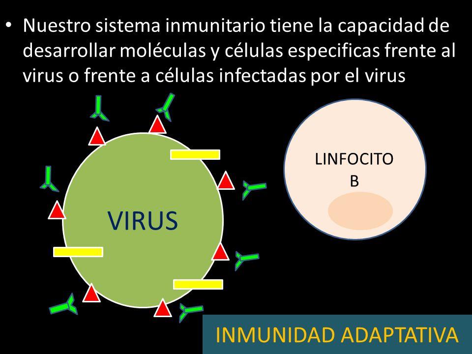 PROTEÍNA ESPECÍFICA DEL VIRUS (ANTÍGENO) VIRUS MOLÉCULA NO ESPECÍFICA DEL VIRUS (PATRÓN MOLECULAR)