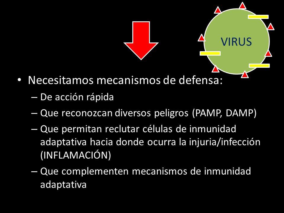 LINFOCITO T CD4/CD8 LINFOCITO B Respuesta inmune adaptativa: especificidad, potencia, memoria Problema: desarrollo de la 1ª respuesta adaptativa (acti