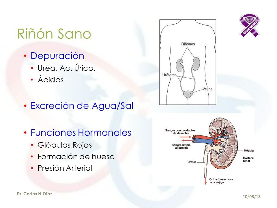 Glomérulo Normal Dr. Carlos H. Diaz 10/05/13