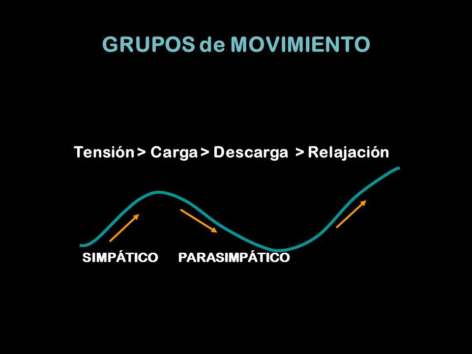 GRUPOS de MOVIMIENTO Tensión > Carga > Descarga > Relajación PARASIMPÁTICOSIMPÁTICO