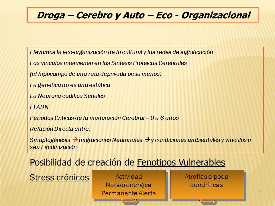 Droga – Cerebro y Auto – Eco - Organizacional Llevamos la eco-organización de lo cultural y las redes de significación Los vínculos intervienen en las