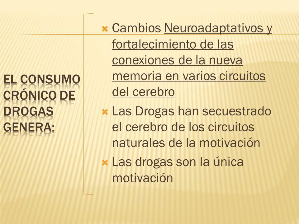 Cambios Neuroadaptativos y fortalecimiento de las conexiones de la nueva memoria en varios circuitos del cerebro Las Drogas han secuestrado el cerebro