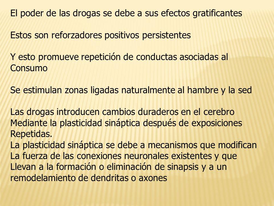 El poder de las drogas se debe a sus efectos gratificantes Estos son reforzadores positivos persistentes Y esto promueve repetición de conductas asoci