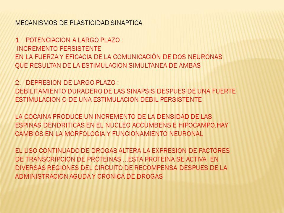 MECANISMOS DE PLASTICIDAD SINAPTICA 1.POTENCIACION A LARGO PLAZO : INCREMENTO PERSISTENTE EN LA FUERZA Y EFICACIA DE LA COMUNICACIÓN DE DOS NEURONAS Q