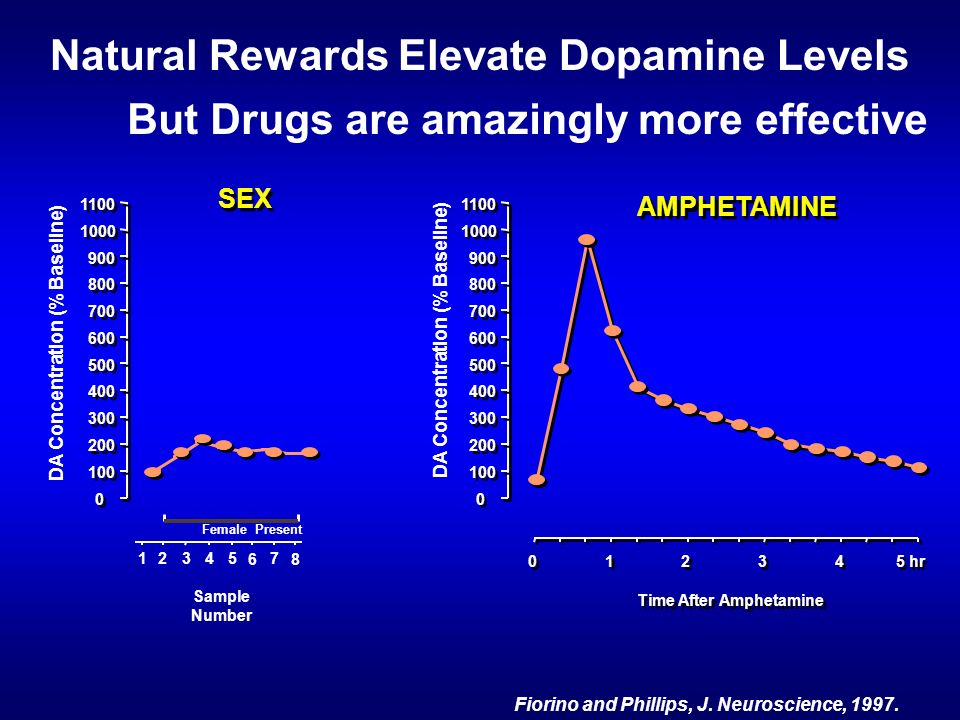 Natural Rewards Elevate Dopamine Levels Fiorino and Phillips, J.