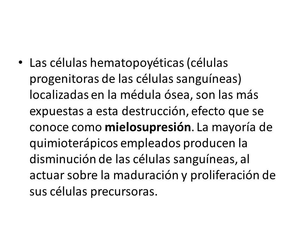 Las células hematopoyéticas (células progenitoras de las células sanguíneas) localizadas en la médula ósea, son las más expuestas a esta destrucción, efecto que se conoce como mielosupresión.