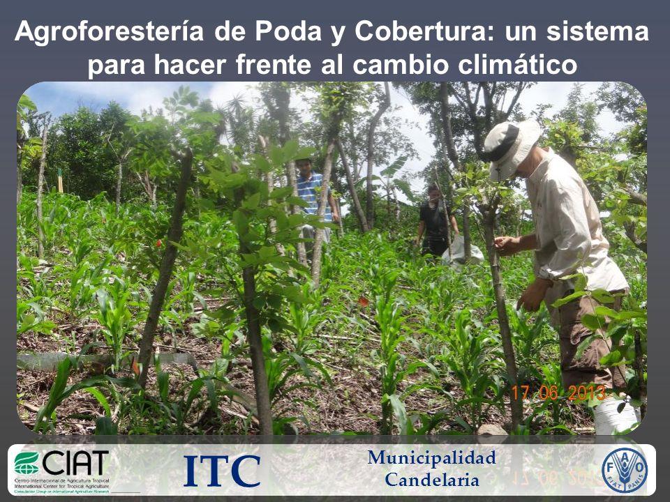 Agroforestería de Poda y Cobertura: un sistema para hacer frente al cambio climático ITC Municipalidad Candelaria