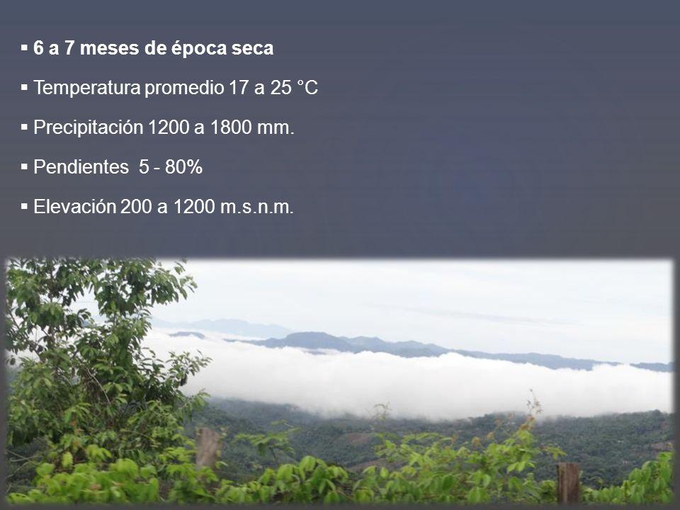 6 a 7 meses de época seca Temperatura promedio 17 a 25 °C Precipitación 1200 a 1800 mm. Pendientes 5 - 80% Elevación 200 a 1200 m.s.n.m.