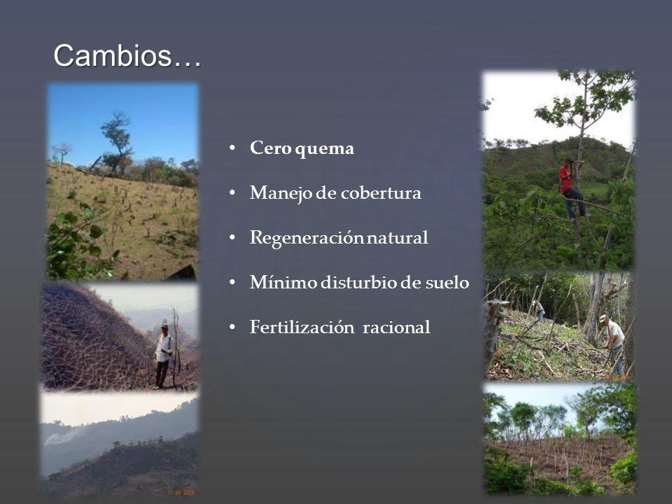 Cambios… Cero quema Manejo de cobertura Regeneración natural Mínimo disturbio de suelo Fertilización racional