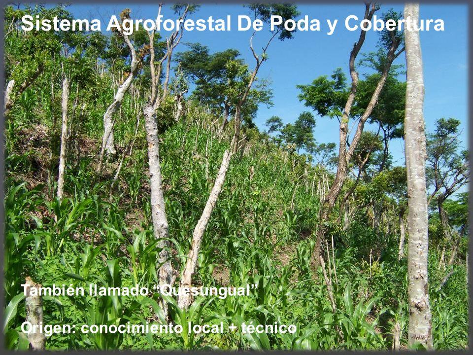 Sistema Agroforestal De Poda y Cobertura También llamado Quesungual Origen: conocimiento local + técnico
