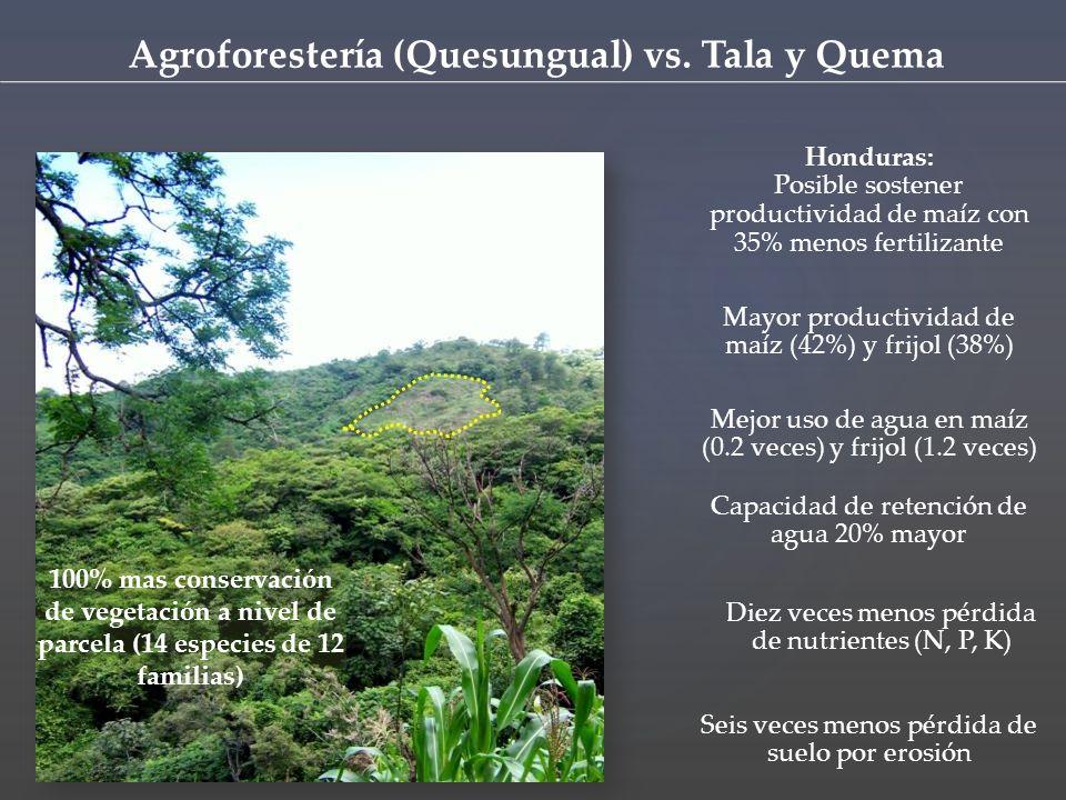 Seis veces menos pérdida de suelo por erosión Diez veces menos pérdida de nutrientes (N, P, K) Capacidad de retención de agua 20% mayor Mejor uso de agua en maíz (0.2 veces) y frijol (1.2 veces) Mayor productividad de maíz (42%) y frijol (38%) Honduras: Posible sostener productividad de maíz con 35% menos fertilizante 100% mas conservación de vegetación a nivel de parcela (14 especies de 12 familias) Agroforestería (Quesungual) vs.