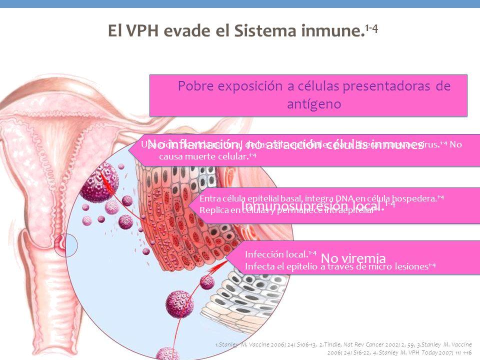 El VPH evade el Sistema inmune. 1-4 1.Stanley M. Vaccine 2006; 24: S106-13, 2.Tindle, Nat Rev Cancer 2002; 2, 59, 3.Stanley M. Vaccine 2006; 24: S16-2