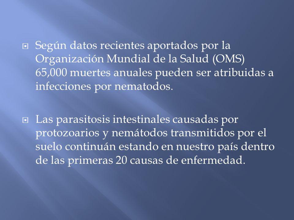 La población principalmente afectada es la de niños y jóvenes entre 1 y 19 años Datos publicados oficialmente por la SS las parasitosis mas prevalentes, de acuerdo a la región, son: amebiasis intestinal, áscaris y las clasificadas en otras helmintiasis (estrongiloidosis,necatoriasis, anquilostomiasis, tricurasis, uncinariasis e himenolepiasis)