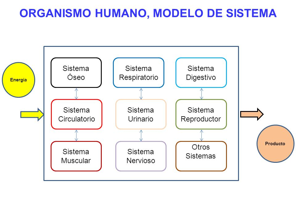 ORGANISMO HUMANO, MODELO DE SISTEMA Sistema Respiratorio Sistema Óseo Sistema Digestivo Sistema Circulatorio Sistema Muscular Sistema Nervioso Sistema