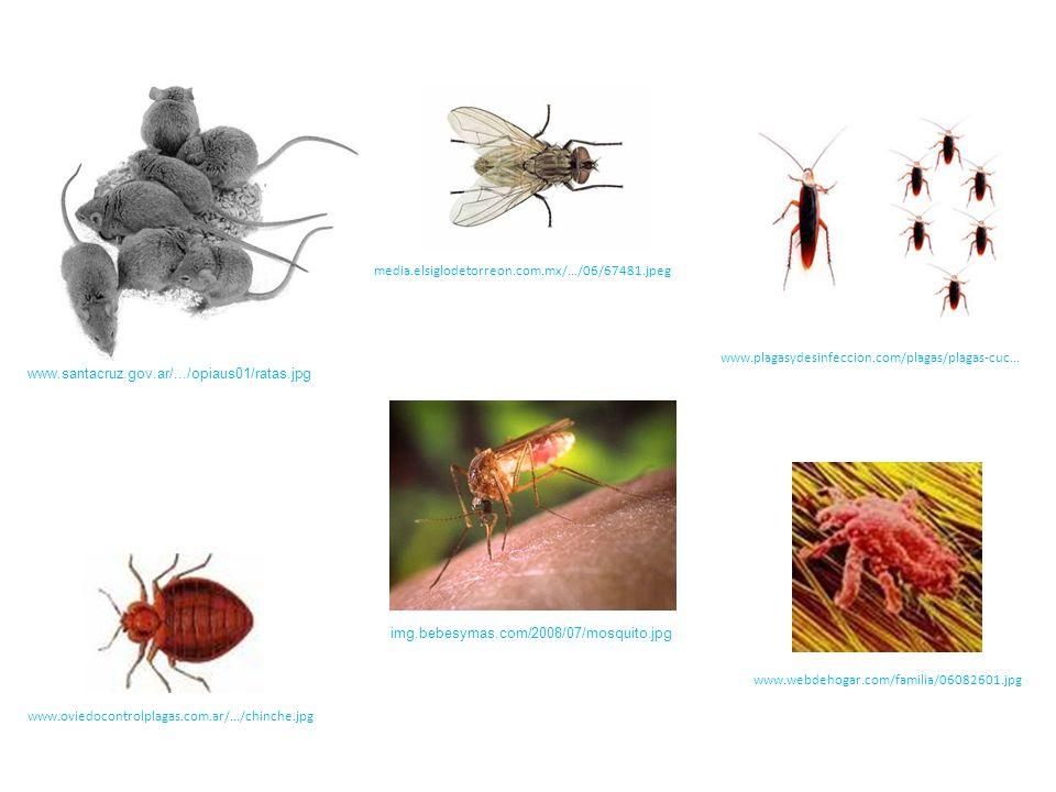 ECOLOGÍA, MULTIDISCIPLINARIA Y TRANSDISCIPLINARIA Rama de la biología que..........
