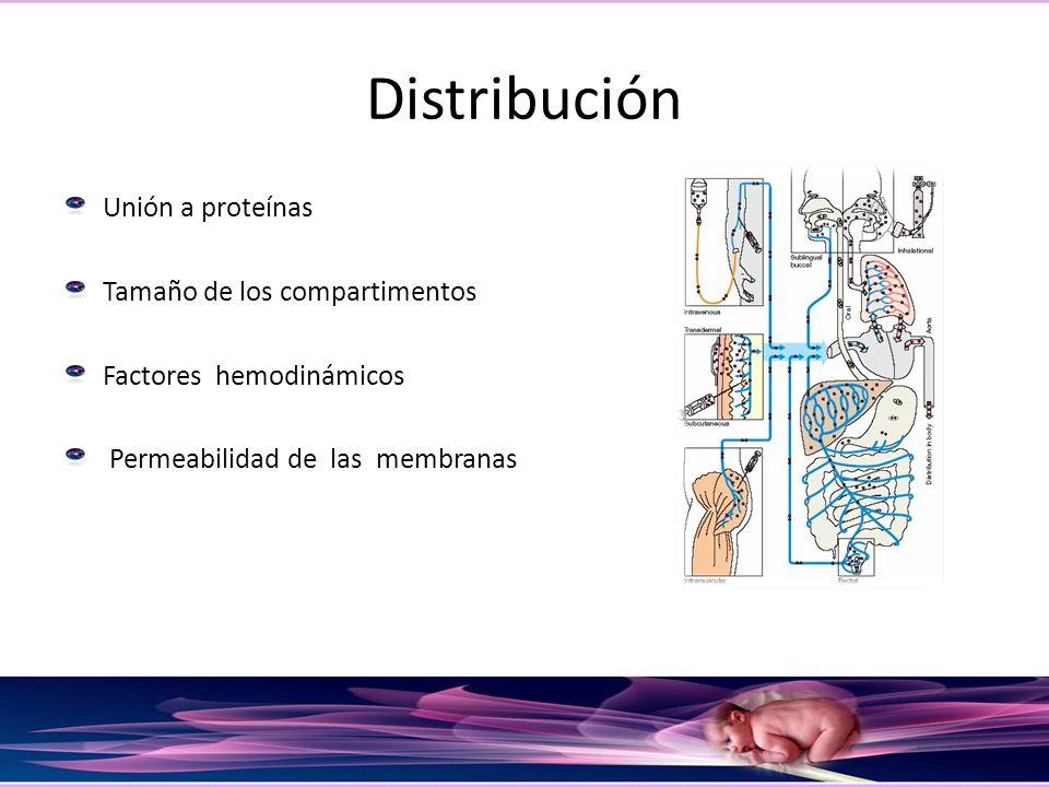 Distribución Unión a proteínas Tamaño de los compartimentos Factores hemodinámicos Permeabilidad de las membranas