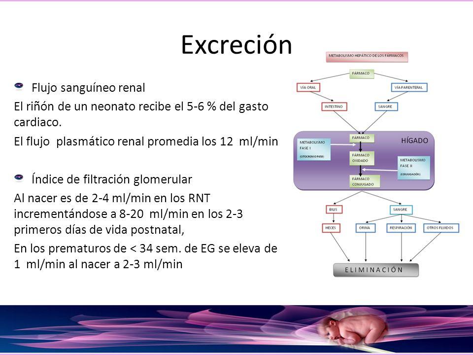 Excreción Flujo sanguíneo renal El riñón de un neonato recibe el 5-6 % del gasto cardiaco. El flujo plasmático renal promedia los 12 ml/min Índice de