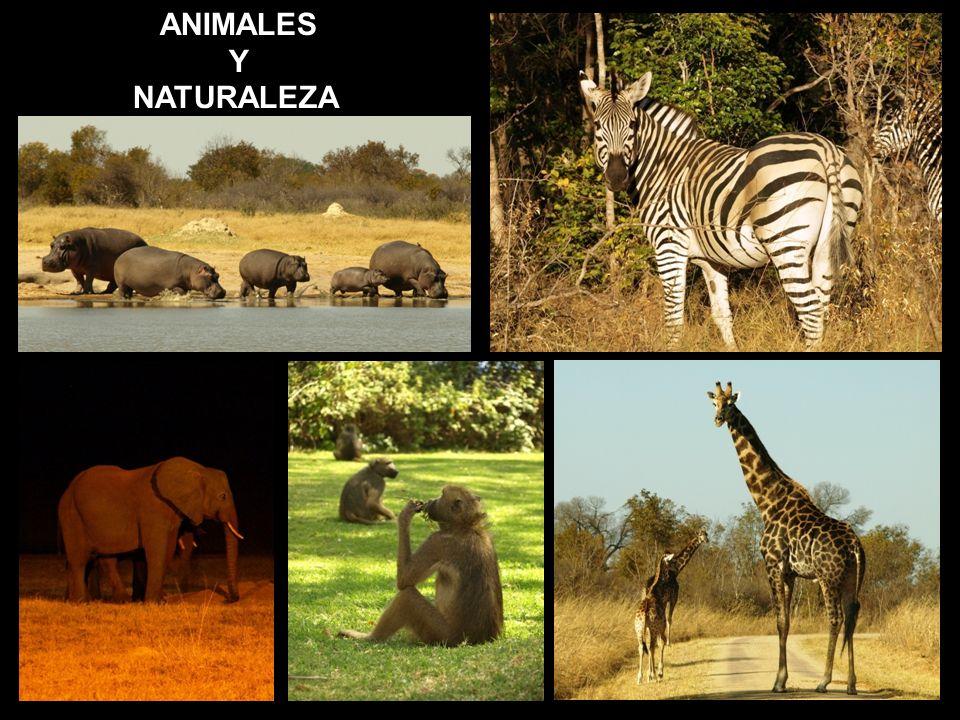 ANIMALES Y NATURALEZA.
