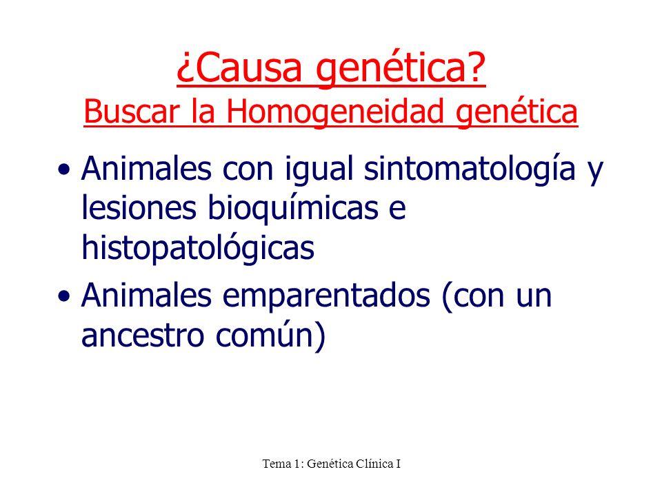 Tema 1: Genética Clínica I ¿Causa genética? Buscar la Homogeneidad genética Animales con igual sintomatología y lesiones bioquímicas e histopatológica