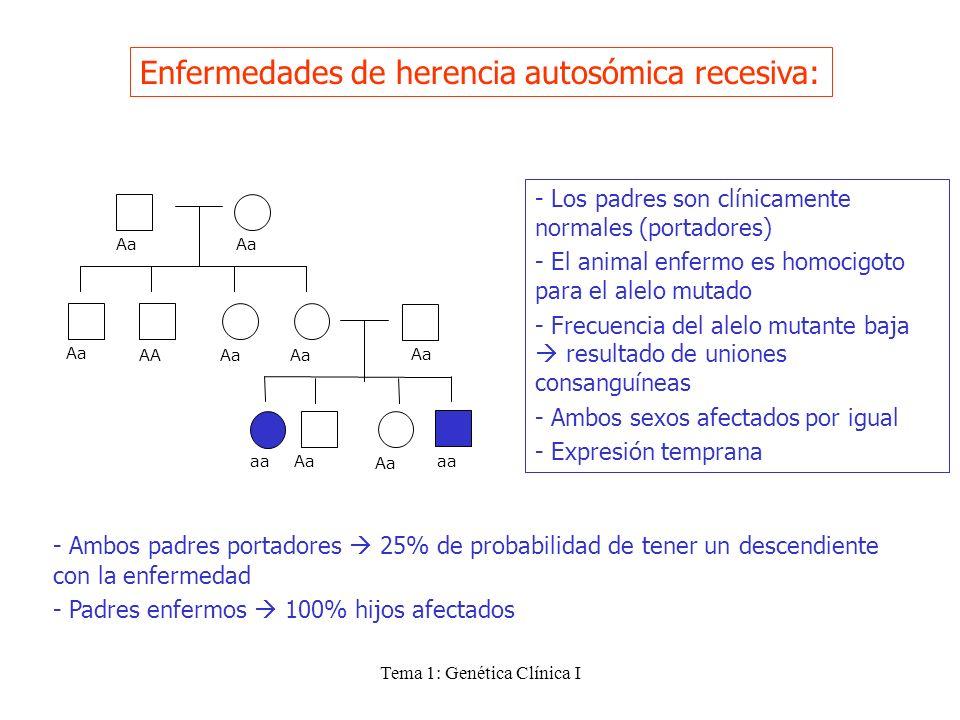 Tema 1: Genética Clínica I Enfermedades de herencia autosómica recesiva: - Los padres son clínicamente normales (portadores) - El animal enfermo es ho