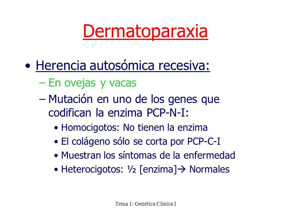 Tema 1: Genética Clínica I Herencia autosómica recesiva: –En ovejas y vacas –Mutación en uno de los genes que codifican la enzima PCP-N-I: Homocigotos