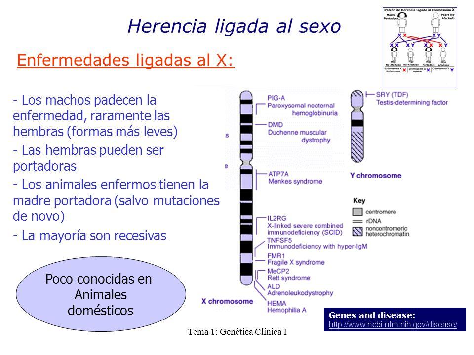 Tema 1: Genética Clínica I Herencia ligada al sexo Enfermedades ligadas al X: Genes and disease: http://www.ncbi.nlm.nih.gov/disease/ http://www.ncbi.