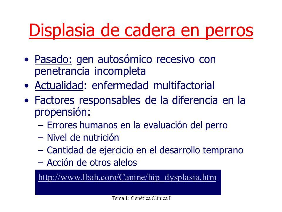 Tema 1: Genética Clínica I Displasia de cadera en perros Pasado: gen autosómico recesivo con penetrancia incompleta Actualidad: enfermedad multifactor